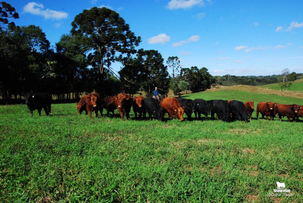 Regime Alimentar - Fazenda Renascença